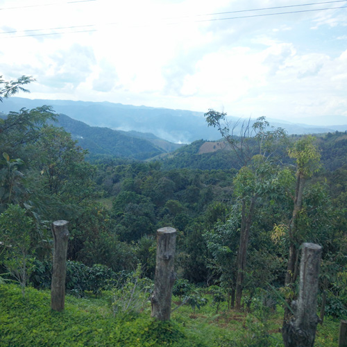Thailand Northern Mountain Coffee Plantation